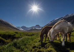 horses at a mountain stream