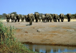 heading to the water hole