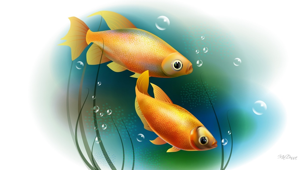 Animal Wallpaper Fish Wallpapers Download Hd Wallpapers And Free Images