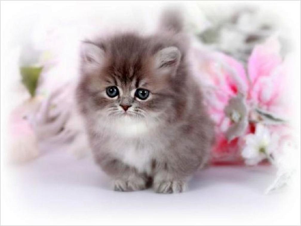 Красивые открытки котятами 24