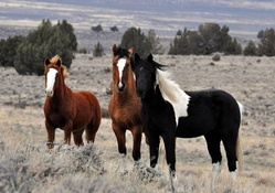 Animal wallpaper horses wallpapers download hd wallpapers and free horses altavistaventures Choice Image