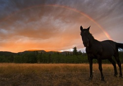 Horse in Rainbow Field