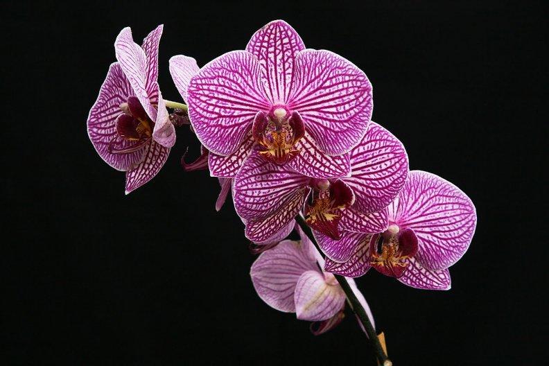 История орхидеи цветка