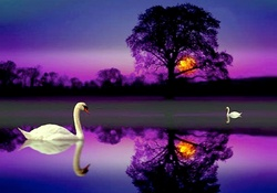 __The Colorful Swan Lake__