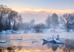 Winter Lake of Swans at Sunrise