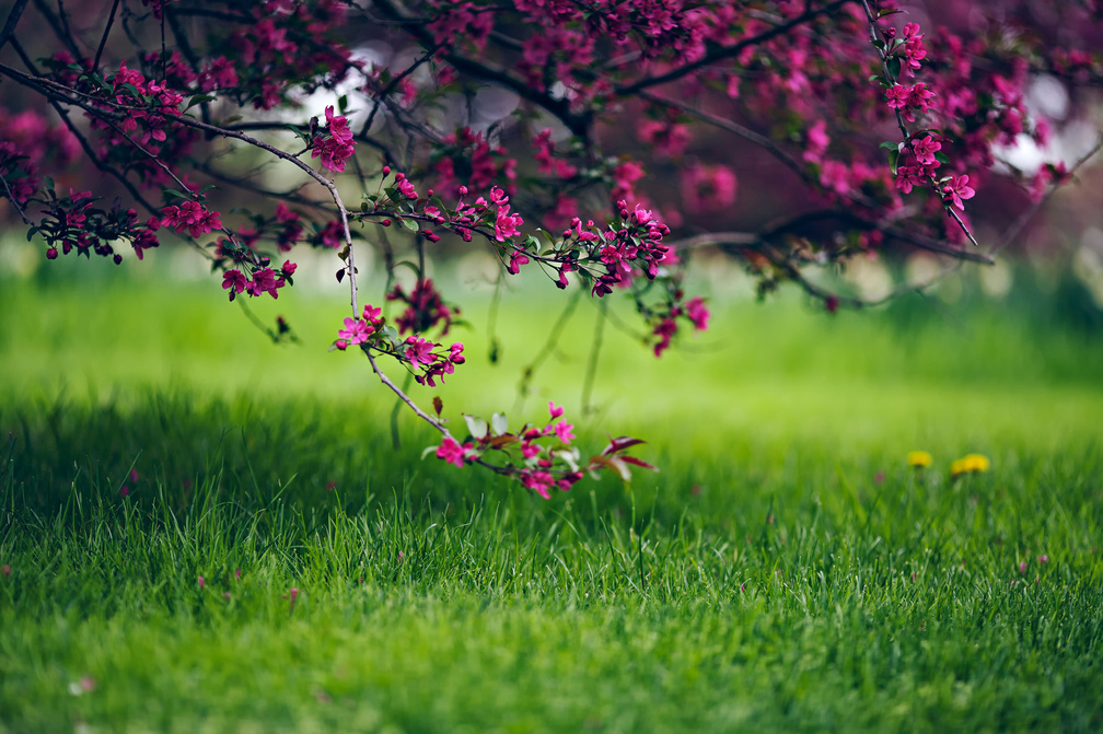 Nature Wallpapers Grass Wallpapers Download Hd Wallpapers And Free Images