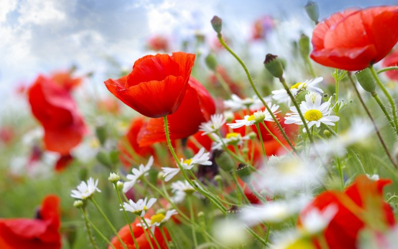 Обои для рабочего стола природа цветы бесплатно