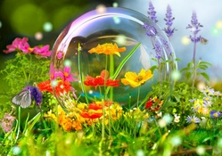 Fowers and a bubble