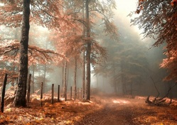 road in a mystical autumn forest