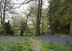 Path thru Bluebells.