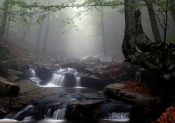 forest creek in fog
