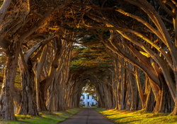 Cypress Tree Tunnel, California