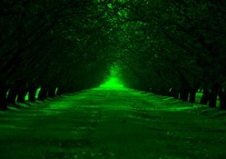 green alley