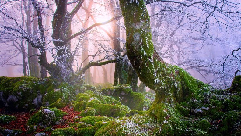 a_frosty_mist_over_a_moss_covered_forest.jpg