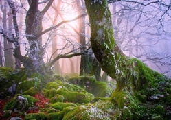 a frosty mist over a moss covered forest