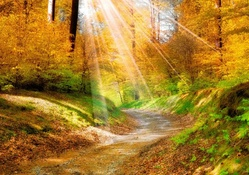 sun rays on a golden forest in autumn