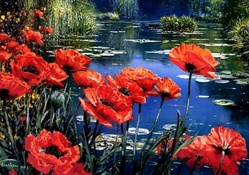 Red Poppies by the Pond F1
