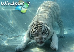 Only Windows 7