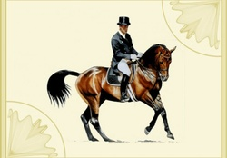 Dressage Horse and Rider f2