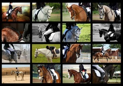 Riding Horse Collage