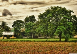 beautiful rural scene hdr