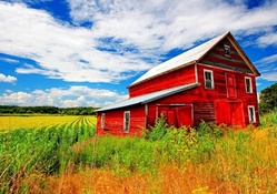 the red barn on a summer day
