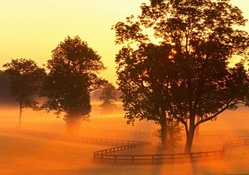 horse farm in morning fog