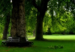 Park bench in Royal Park