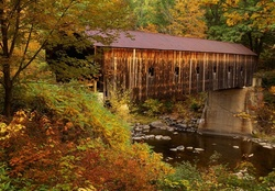 Covered bridge in forest