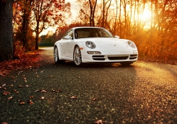 Porsche 911 in the autumn forest