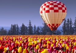 Hot air balloon over tulips field
