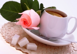 Pink rose and a cup of tea