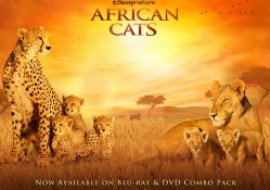 African_Cats