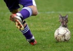 Soccerball Player And Cat