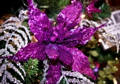 Purple glow for Christmas