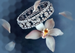 Orchids and Diamonds F2