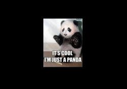 its cool im just a panda