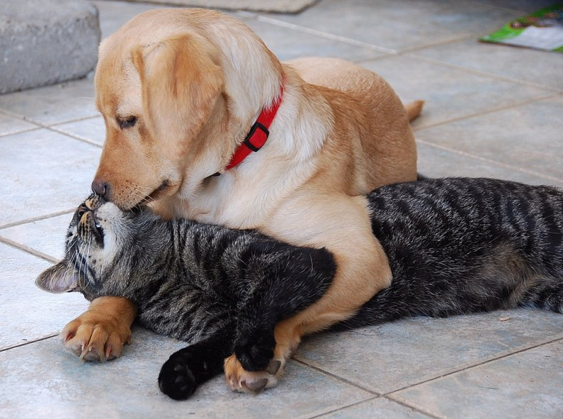 dog_kissing_cat.jpg