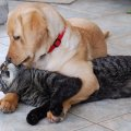 dog kissing cat