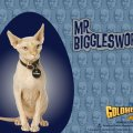 mr. Bigglesworth
