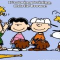 it's spring training charlie brown