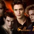 twilight _ cullens boys