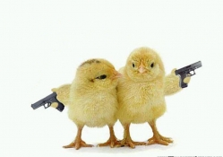 Armed Chicks
