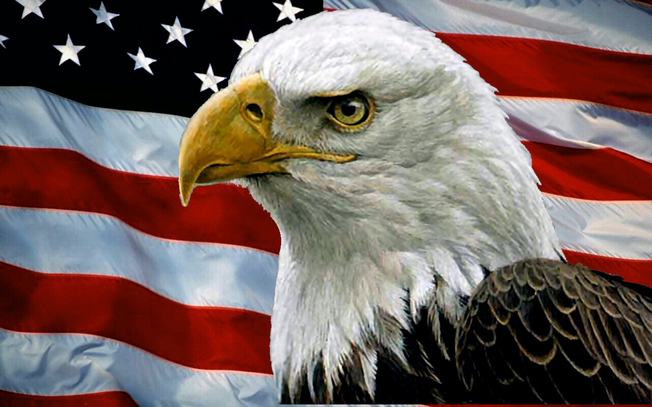 Bald Eagle And USA Flag F Download HD Wallpapers Free Images