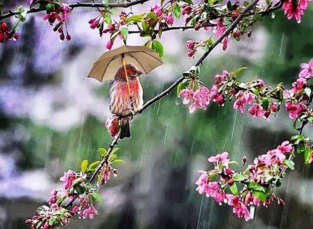 Rainy day bird download hd wallpapers and free images thecheapjerseys Gallery
