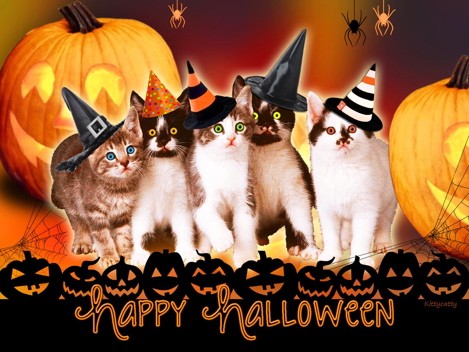 Good Wallpaper Halloween Kitten - 20140922933323-403cf9c8  Picture_693249.jpg