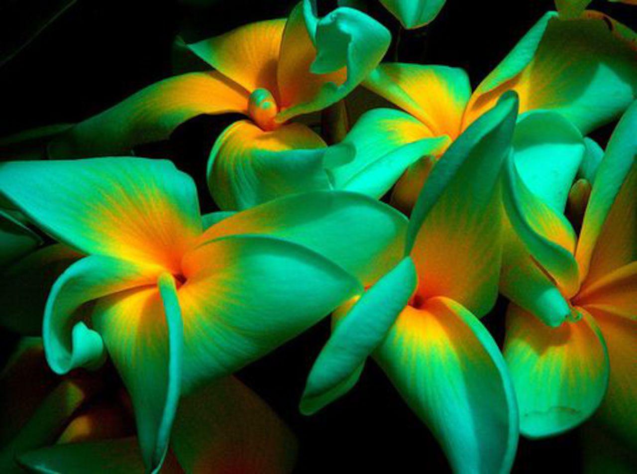 Красивые редкие цветы фото и названия