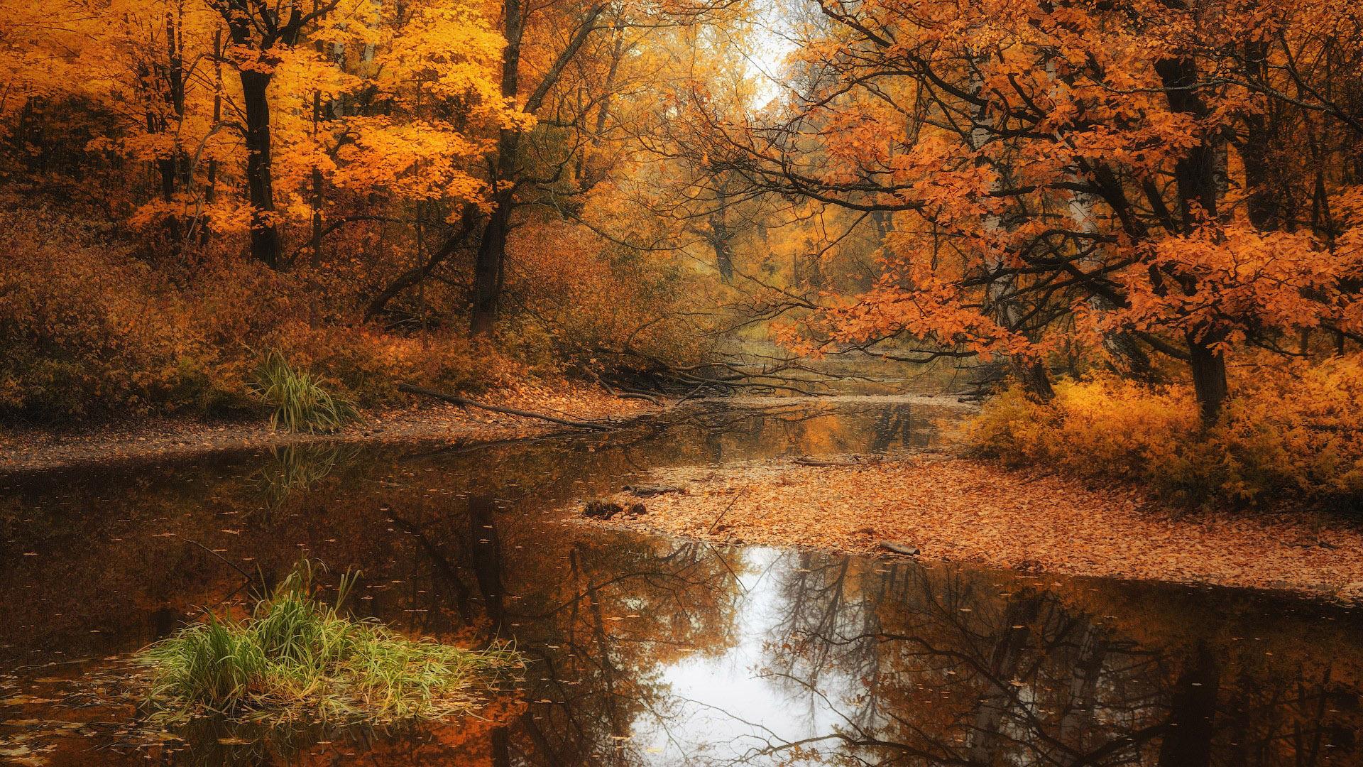 Осень картинки hd качество 8